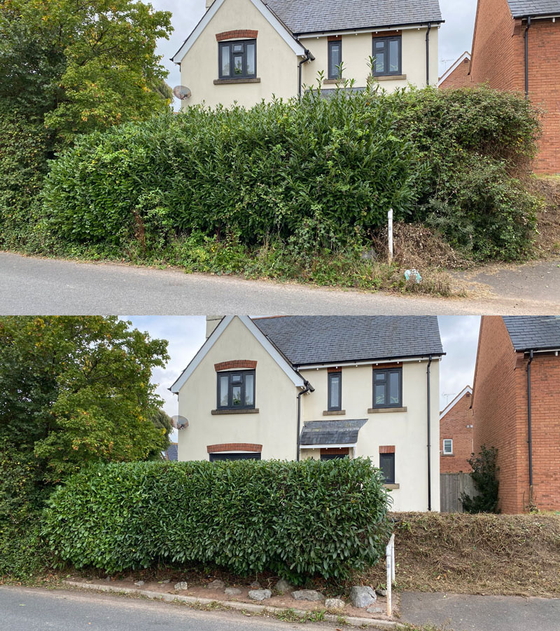 Hedge Cutting Exeter
